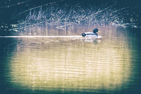 Photograph - Yesteryear Duck by Erich Grant