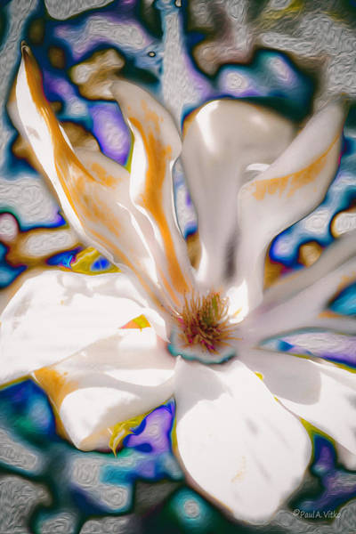 Photograph - Yet Another Magnolia by Paul Vitko