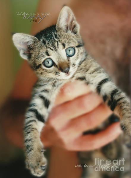 Photograph - Yiddie Kitten Hand by Vicki Ferrari