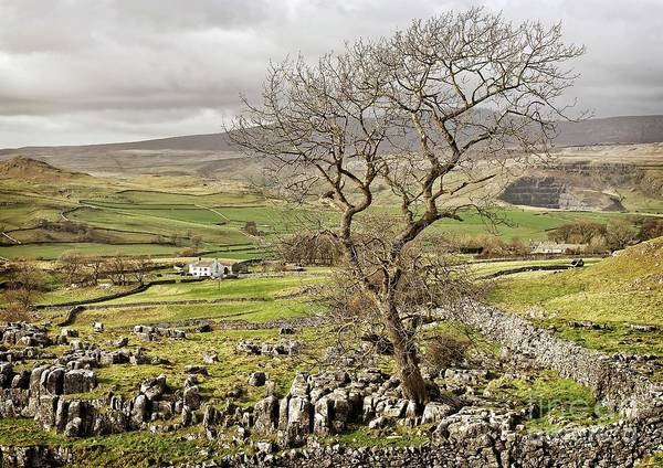 Photograph - Yorkhire Dales Limestone Landscape by Martyn Arnold