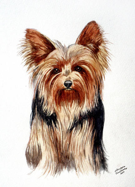 Painting - Yorkie by Christopher Shellhammer
