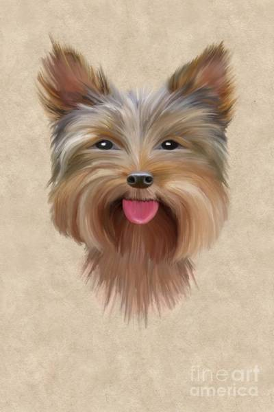 Wall Art - Painting - Yorkie by John Edwards