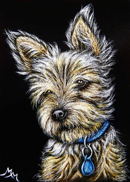 Painting - Yorkie by Monique Morin Matson
