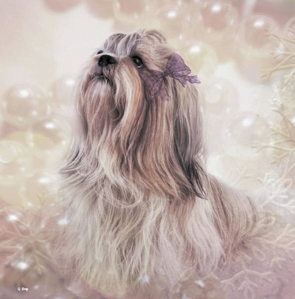 Toy Mixed Media - Shih Tzu Portrait by G Berry
