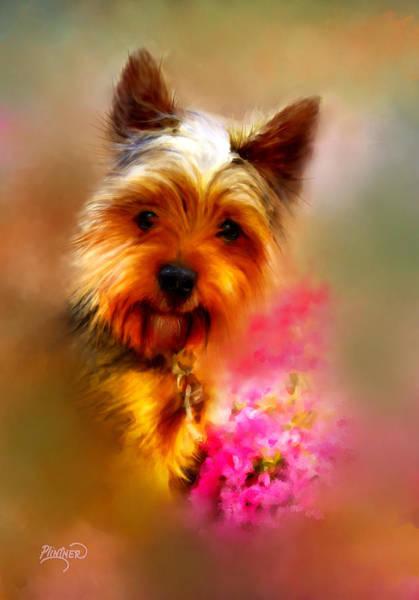Terrier Digital Art - Yorkie Portrait by Patricia Lintner