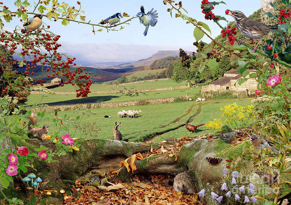 Photograph - Yorkshire Dales Hedgerow by Warren Photographic