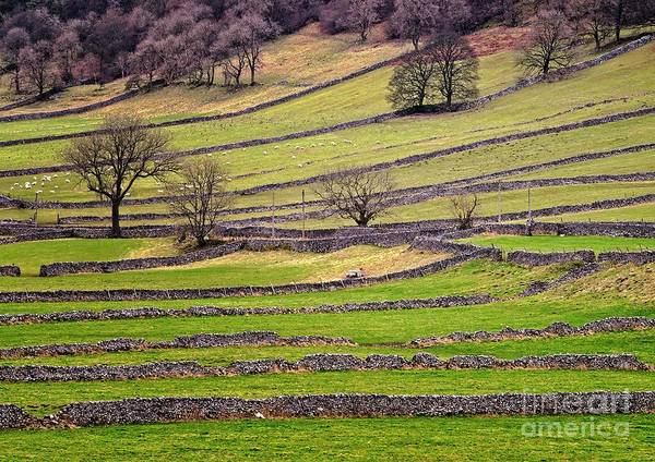 Photograph - Yorkshire Dales Stone Walls by Martyn Arnold