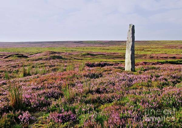 Photograph - Yorkshire Moorland Heather In Nidderdale by Martyn Arnold