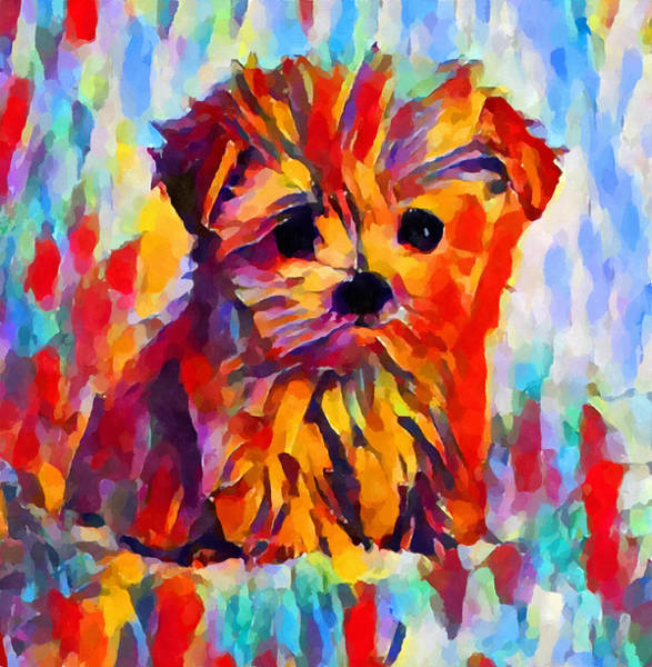 Wall Art - Painting - Yorkshire Terrier by Chris Butler