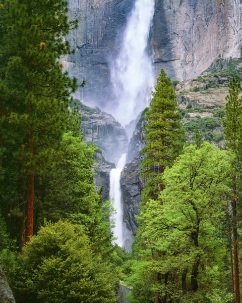 Photograph - Yosemite Falls Through The Trees by Mark Miller