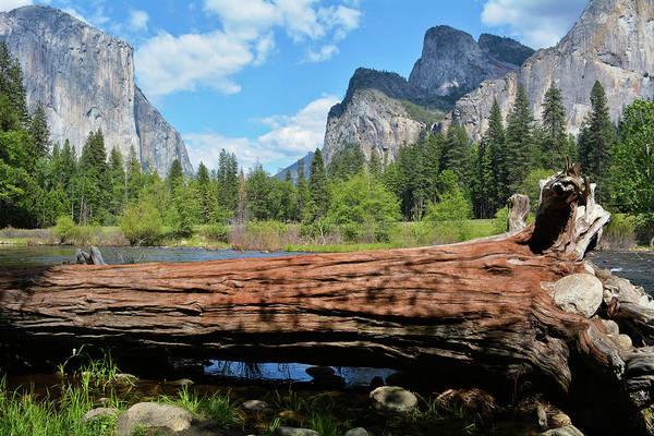 Photograph - Yosemite Log by Kyle Hanson