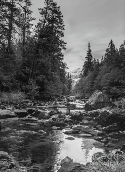 Photograph - Yosemite River by Paul Quinn