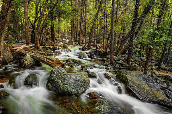 Wall Art - Photograph - Yosemite Stream by Andrew Soundarajan