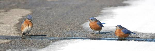 Photograph - You Are About To Cross A Line Buddy by David Dunham
