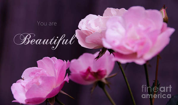 Photograph - You Are Beautiful 2 by Andrea Anderegg