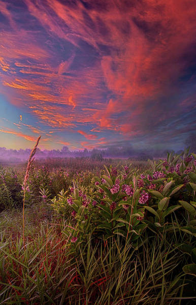 Wall Art - Photograph - You Are My Life by Phil Koch