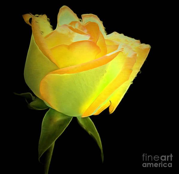 Yellow Rose Photograph - You Are My Sunshine by Krissy Katsimbras
