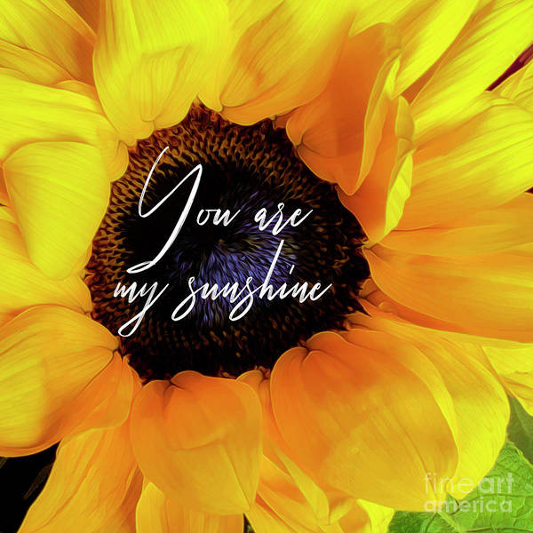 Photograph - You Are My Sunshine....sunflower by Hal Halli