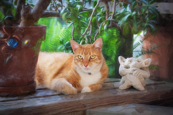 Orange Tabby Photograph - You Both Lookin At Me Ginger Cat by Rich Franco