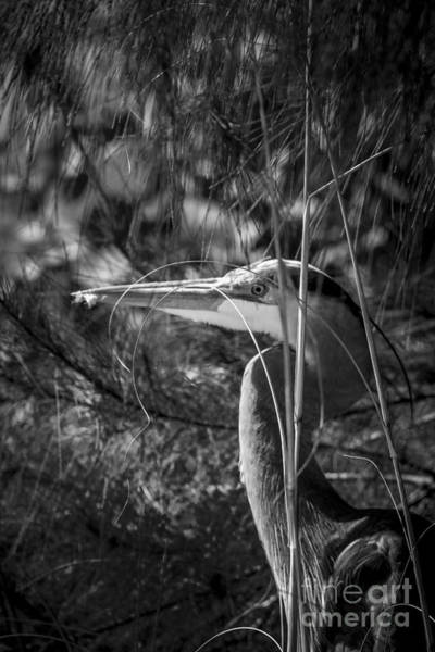Wall Art - Photograph - You Can't See Me-bw by Marvin Spates