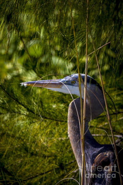 Egret Photograph - You Can't See Me by Marvin Spates