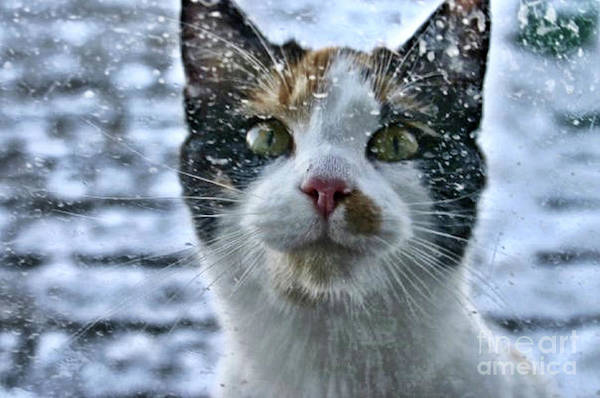 Feed Me Photograph - You Do Know Its Snowing Right by Scott D Van Osdol