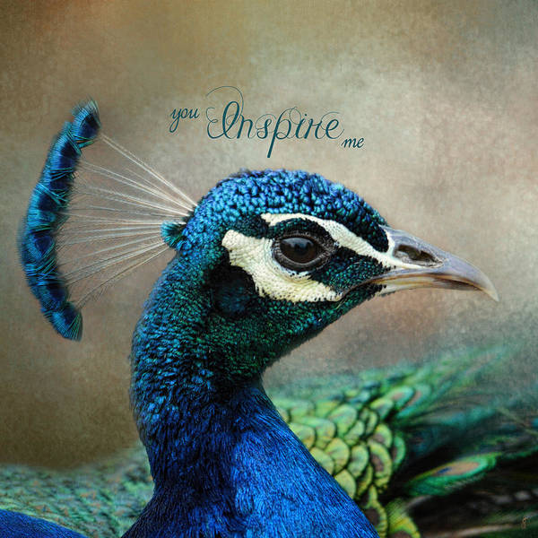 Photograph - You Inspire Me - Peacock Art by Jai Johnson