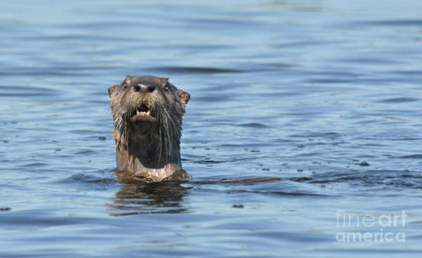 Photograph - You Otter Know by Vivian Martin
