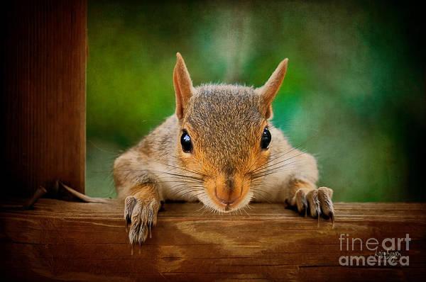 Grey Squirrel Photograph - You Rang by Lois Bryan