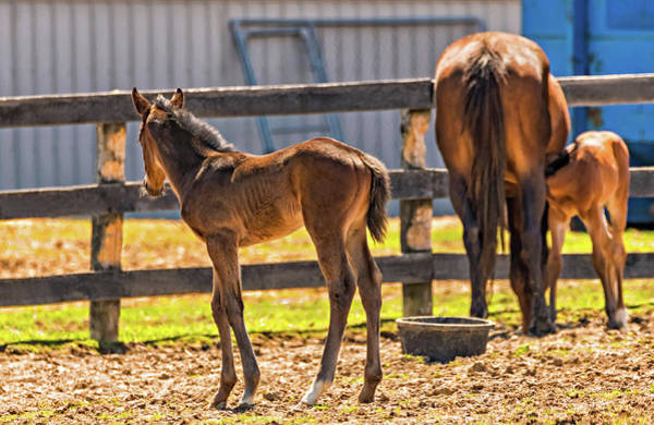 Mare And Foal Photograph - Young And Hungry by Steve Harrington