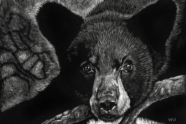Drawing - Young Black Bear by William Underwood