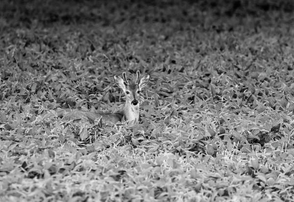 Wall Art - Photograph - Young Buck 2017-2 by Thomas Young