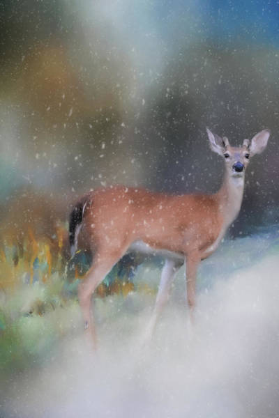 Photograph - Young Buck In The Snow Deer Art By Jai Johnson by Jai Johnson