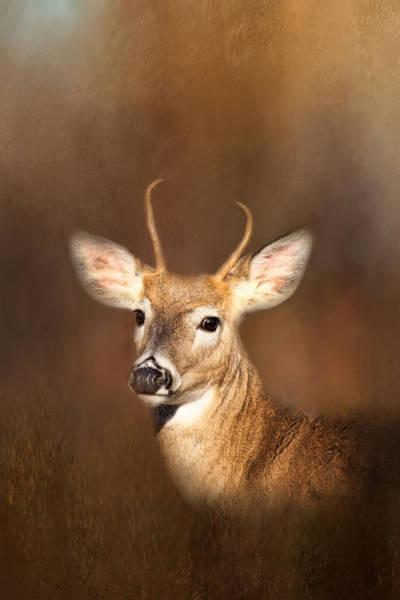 Photograph - Young Buck by Kim Hojnacki