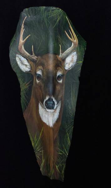 Painting - Young Buck by Nancy Lauby