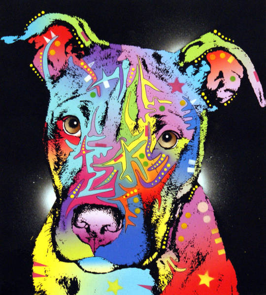 Pitbull Painting - Young Bull Pitbull by Dean Russo Art
