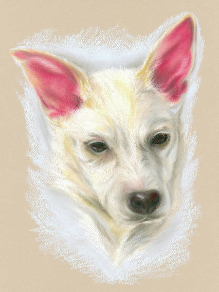 Pastel - Young Carolina Dog Portrait by MM Anderson