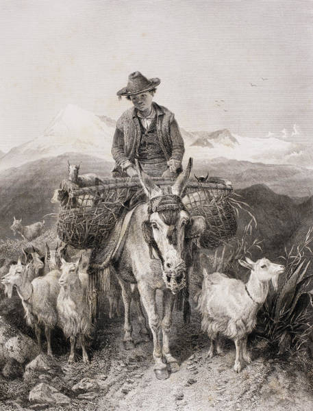 Herd Drawing - Young Granada Goatherder Riding A by Vintage Design Pics