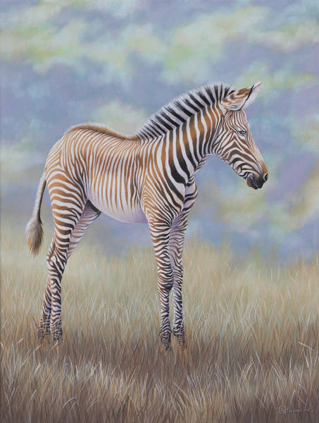 Young Grevy Zebra Art Print