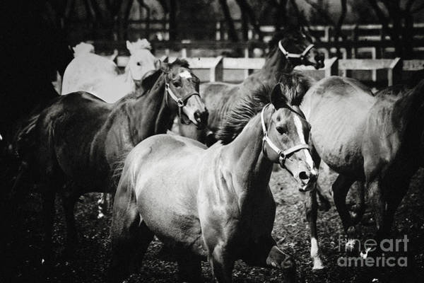 Photograph - Young Horses On The Pasture by Dimitar Hristov