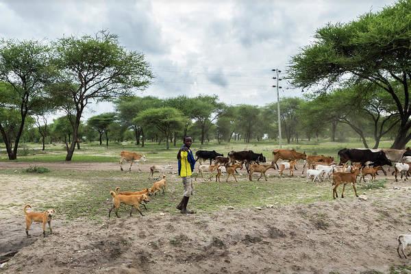 Photograph - Young Maasai Shepherd by RicardMN Photography