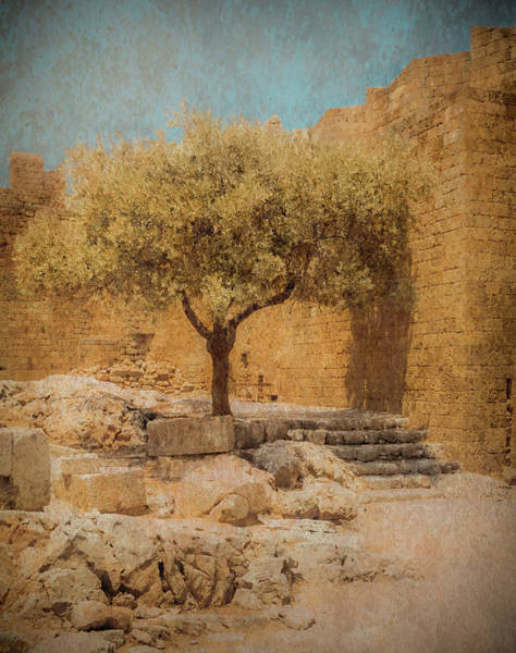 Photograph - Rhodes, Greece - Young Olive by Mark Forte
