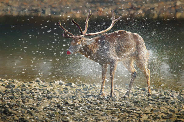 Photograph - Young Rudolph by Ericamaxine Price