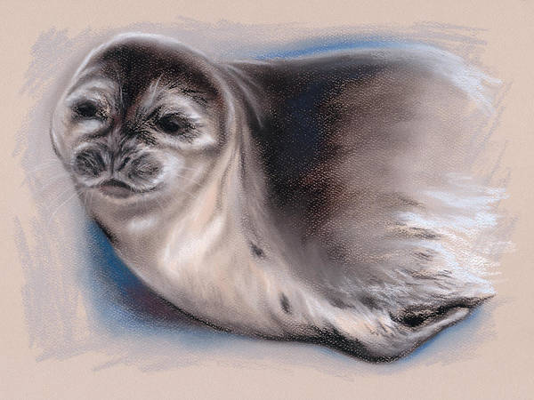 Pastel - Young Seal by MM Anderson