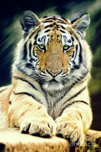 Digital Art - Young Tiger by Angela Doelling AD DESIGN Photo and PhotoArt