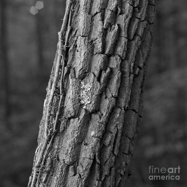 Photograph - Young Tree by Patrick M Lynch