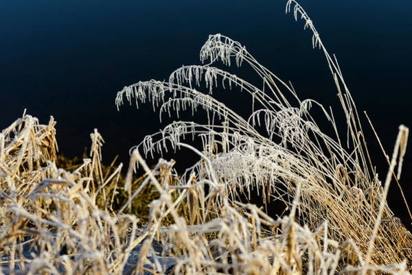 Photograph - Youngs River And Frost by Robert Potts
