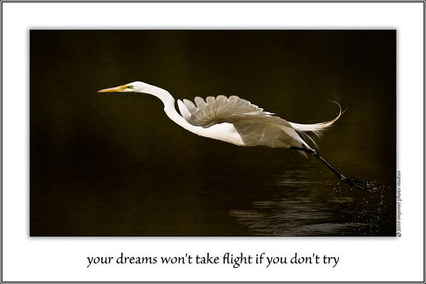 Photograph - Your Dreams Won't Take Flight If You Don't Try by  Onyonet  Photo Studios