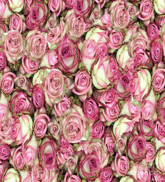 Photograph - Your Pink Roses by Rockin Docks Deluxephotos