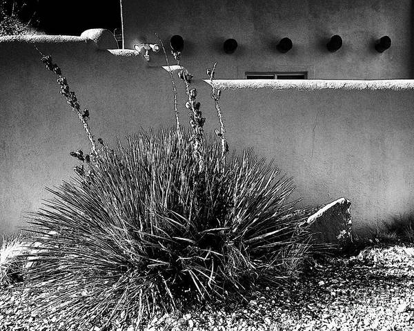 Photograph - Yucca And Adobe by Charles Muhle